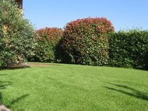 giardino, giardinaggio, pulizia giardino